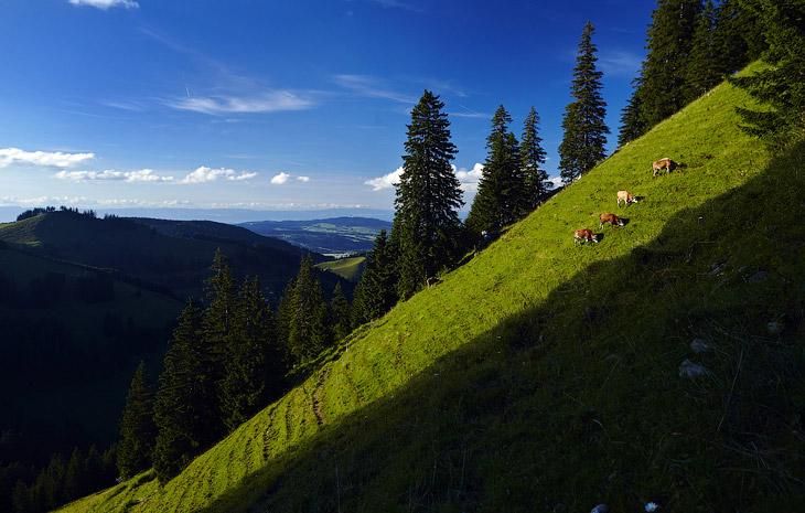 Мы находимся в горах в округе Грюйер, Швейцария
