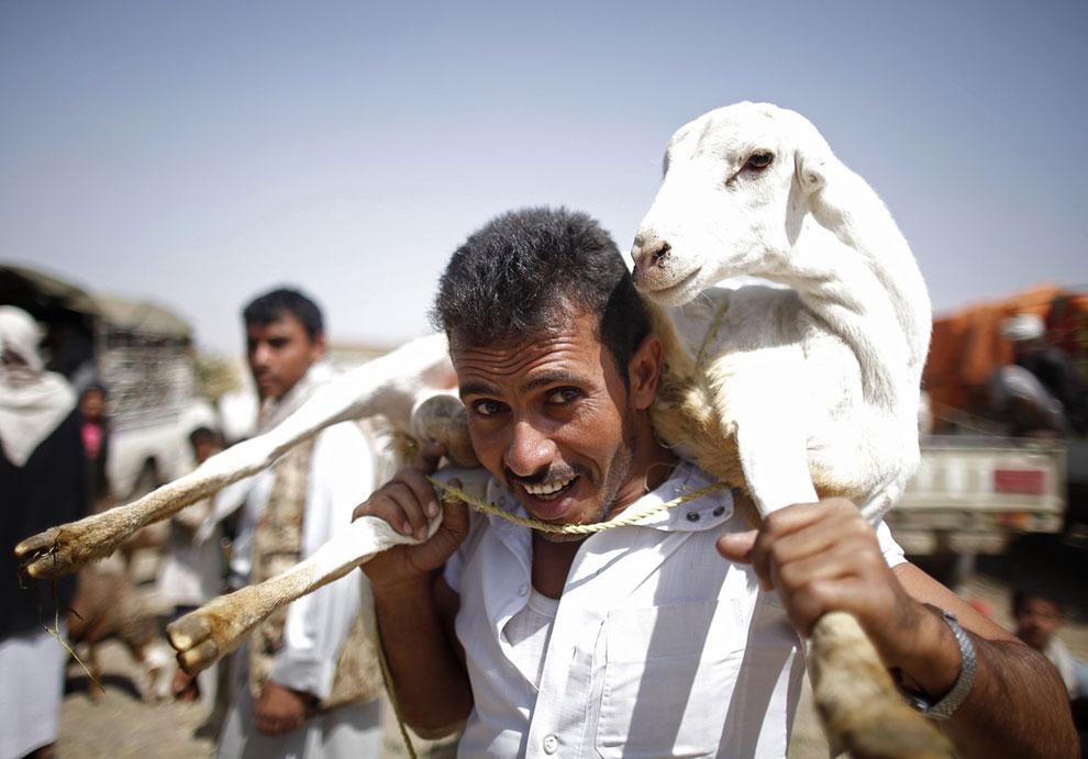 Мужчина купил на рынке жертвенную овечку