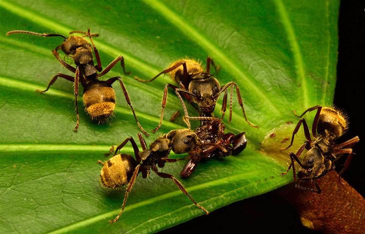 Пир у муравьев