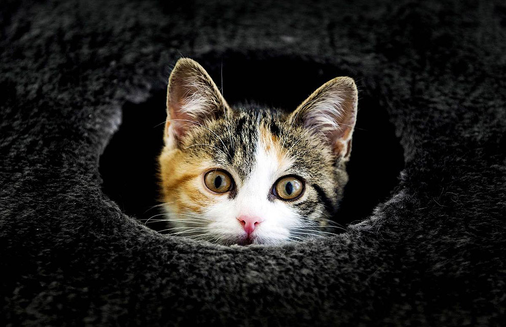 Кот из приюта для животных выглядывает в отверстие, Германия