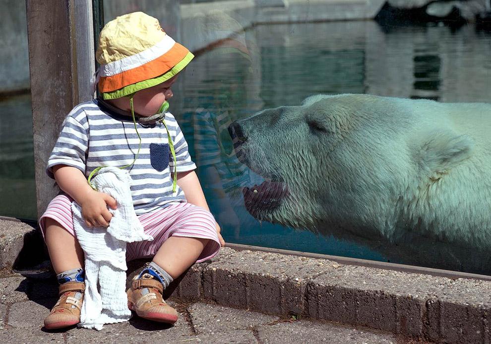 Белый медведь в зоопарке Вильгельма в Штутгарте, Германия