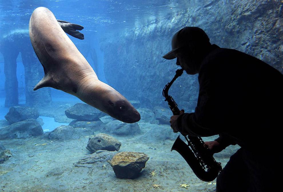 В зоопарке Таронга в Сиднее изучают реакции животных на различные звуки