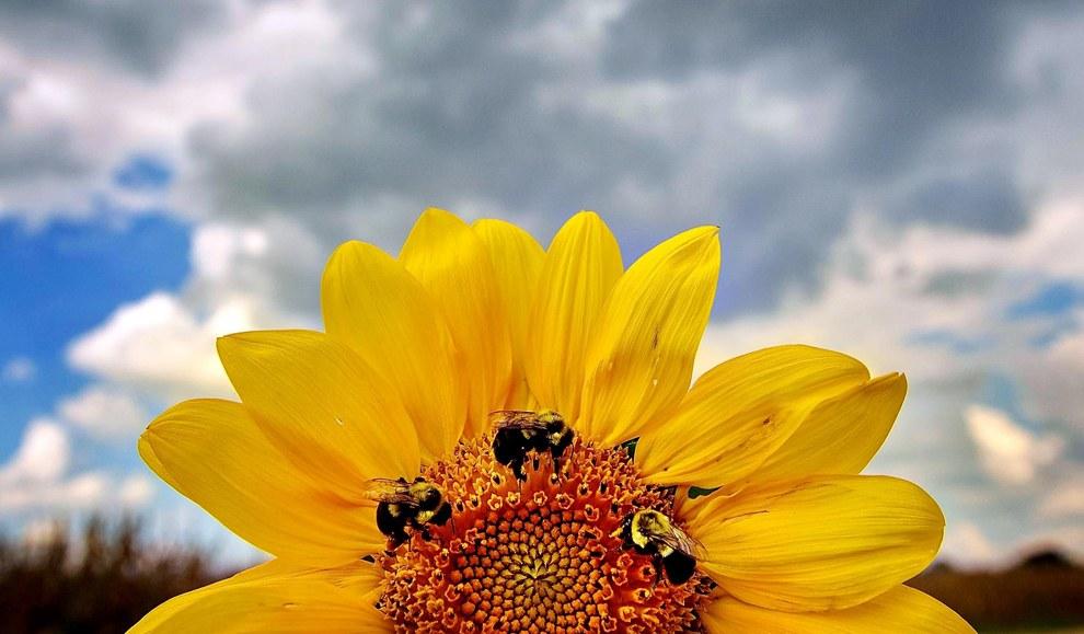 Повседневная жизнь пчел. Мемфис, штат Теннеси