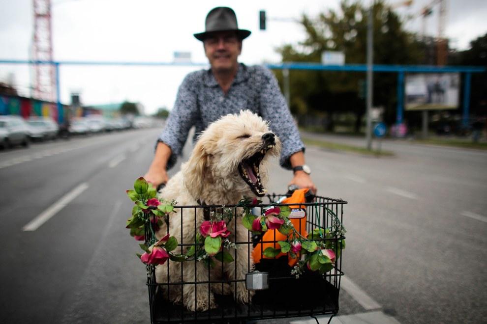 Хозяин с собакой едут на велосипеде по улицам Берлина, Германия