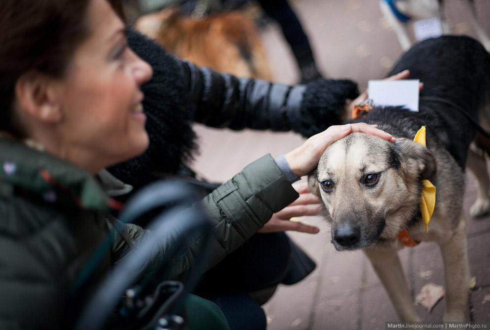 Выставка собак из московских приютов