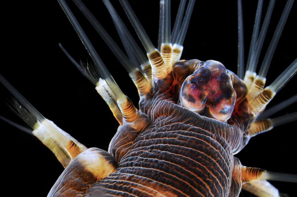 20-кратное увеличение морского червя