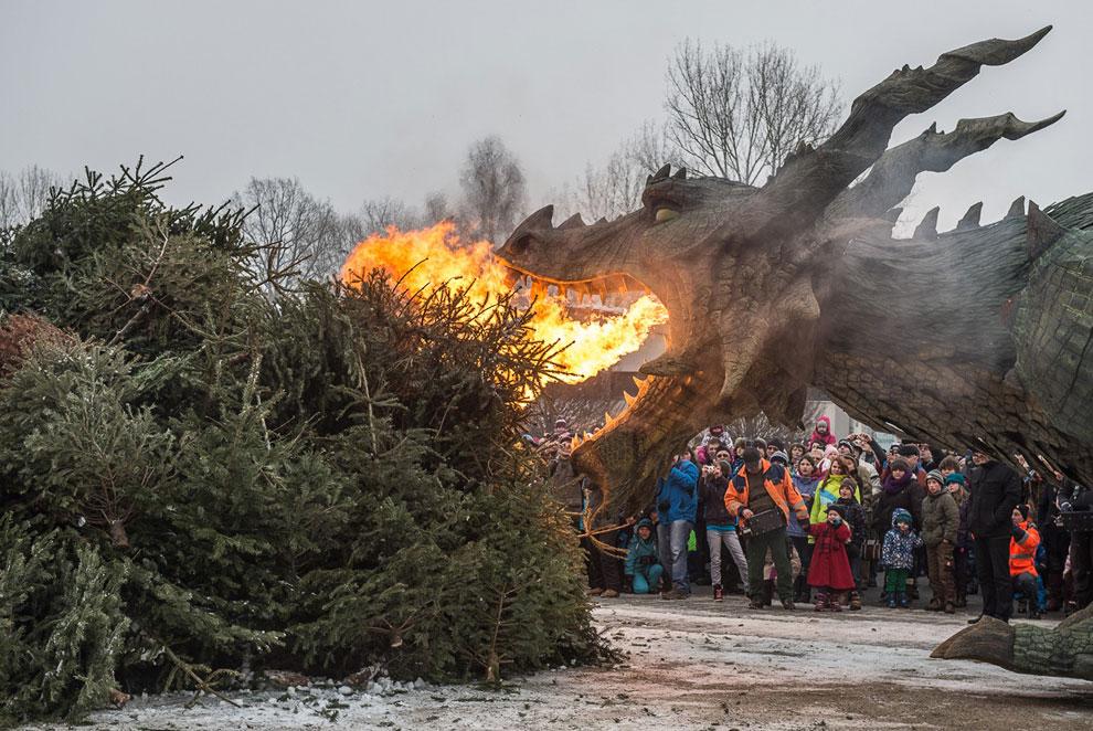 А в немецком городе Фюрт-им-Вальде робот-динозавр помогал эффектно расправиться с бывшими новогодними елками