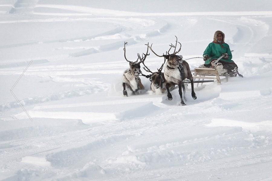 Пуровский район, Ямало-Ненецкая область