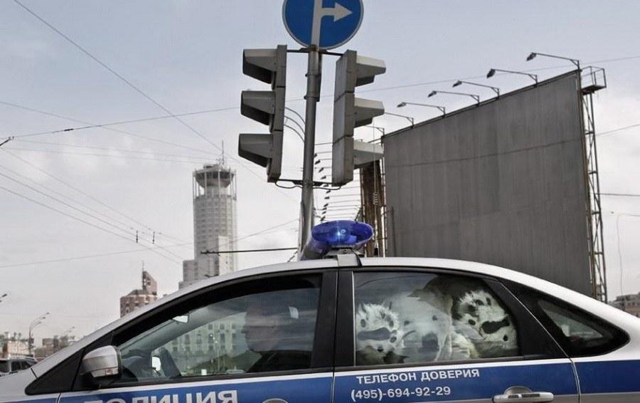 Задержанные активисты Greenpeace в костюмах белых медведей, Москва