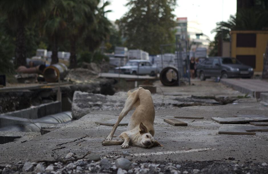 Собака резвится на улице в центре Сочи