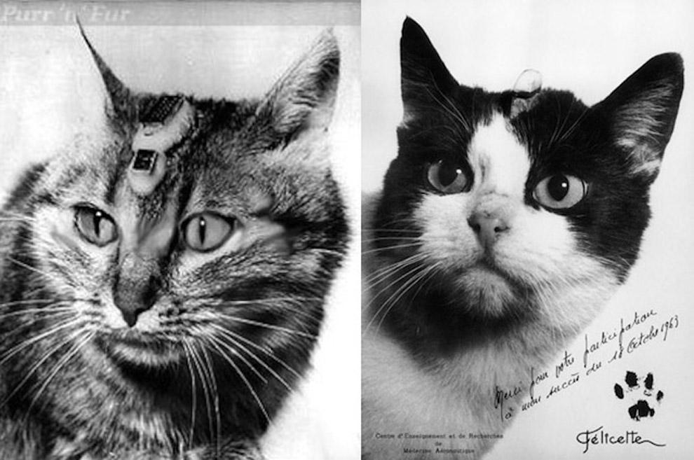Слева — Феликс, справа — Фелисетта