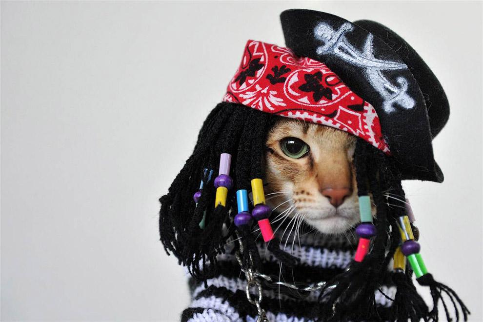 На выставке кошек в Кыргызстане