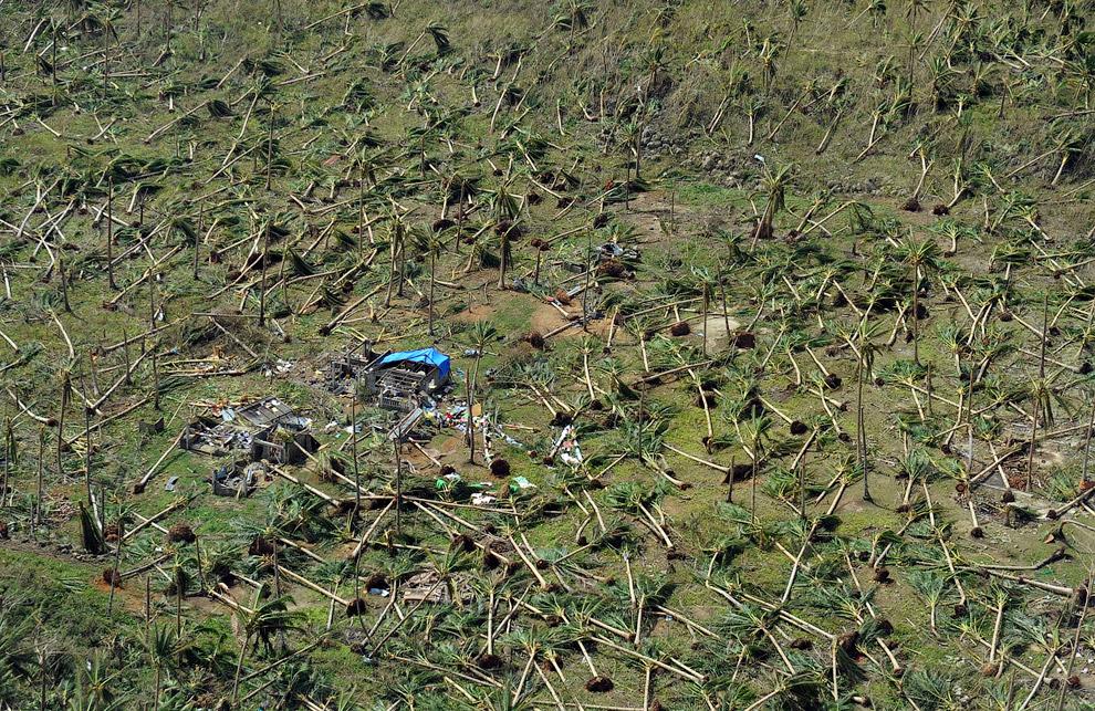 Здесь на снимке видны выкорчеванные кокосовые пальмы