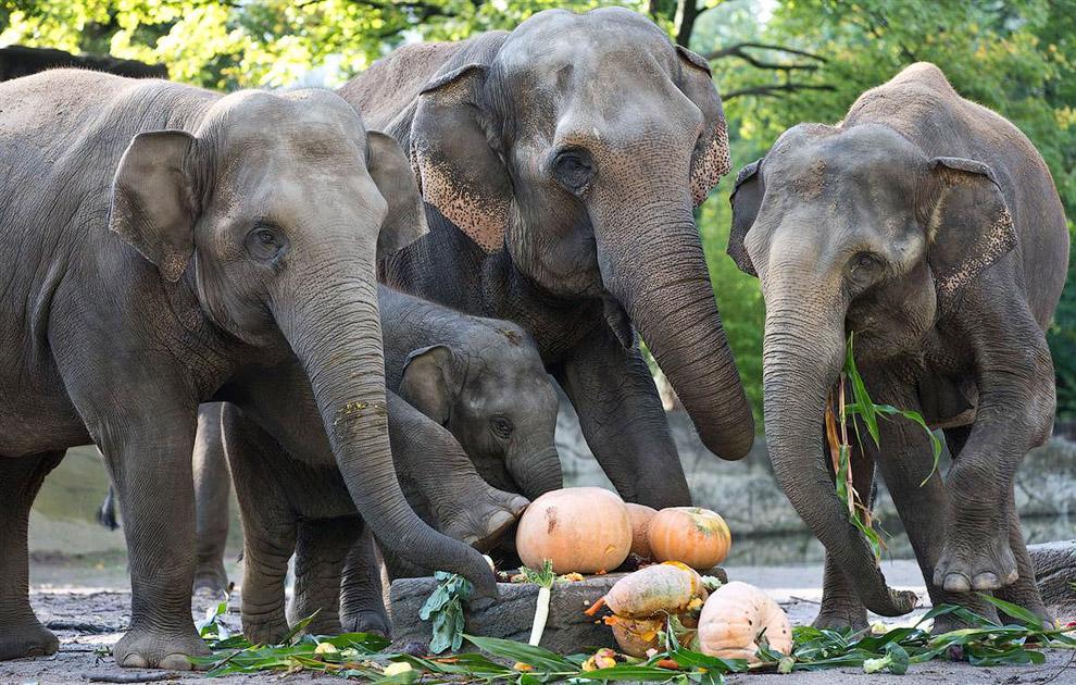 Слоны в германском зоопарке