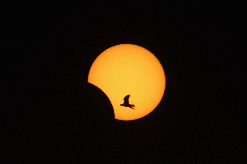 Птица и редкое гибридное солнечное затмение на юге Ливана