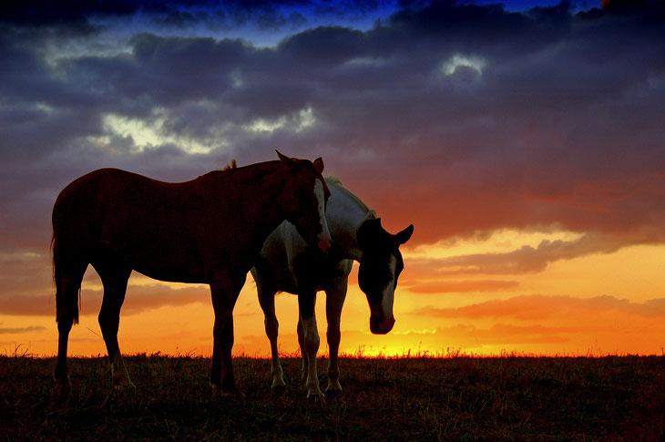 Год Синей деревянной Лошади