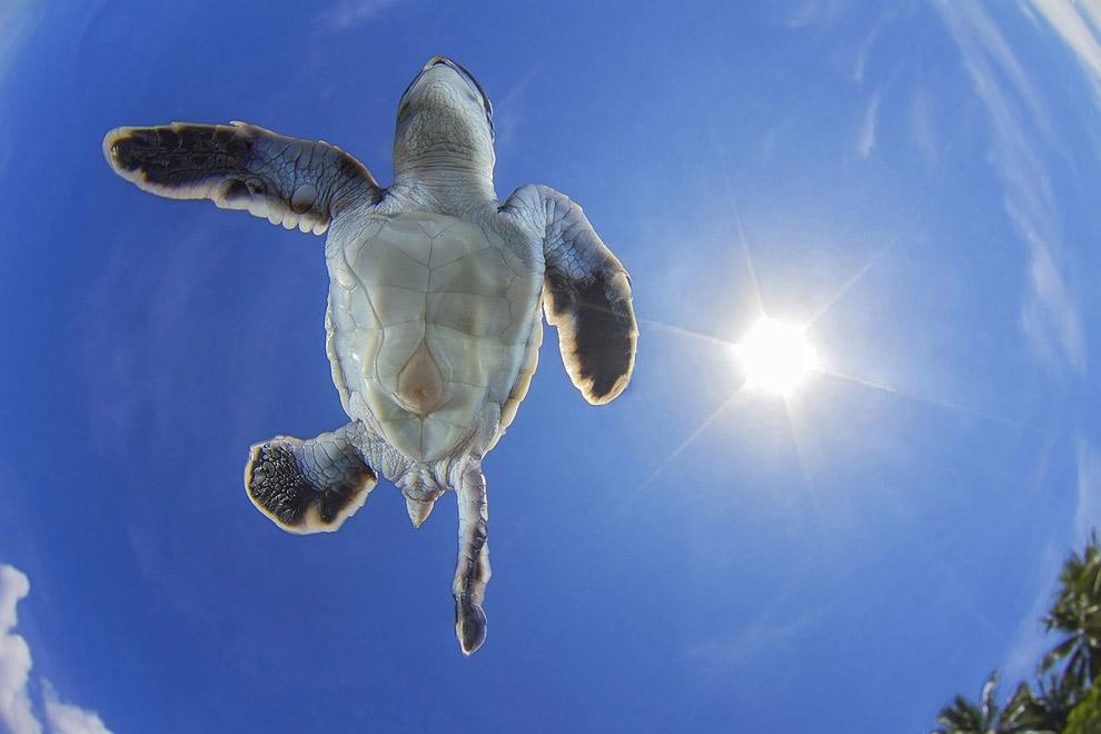 Необычный взгляд на зеленую морскую черепаху
