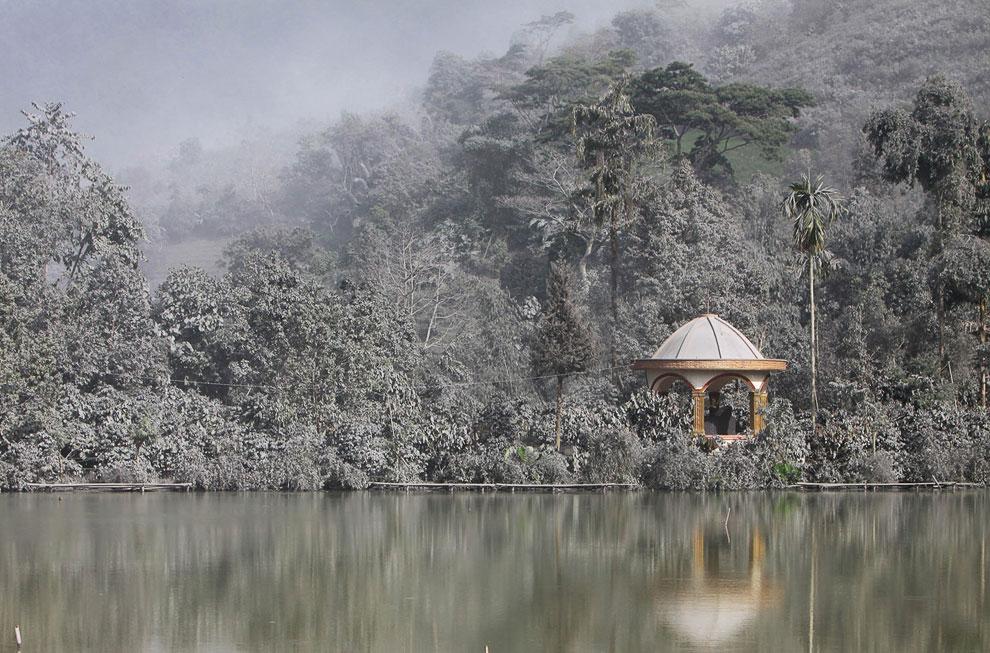 Деревья и растительность покрыты вулканическим пеплом