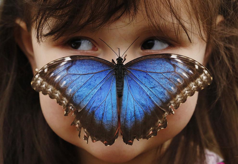 Интересный кадр с выставки бабочек в Музее естественной истории в Лондоне