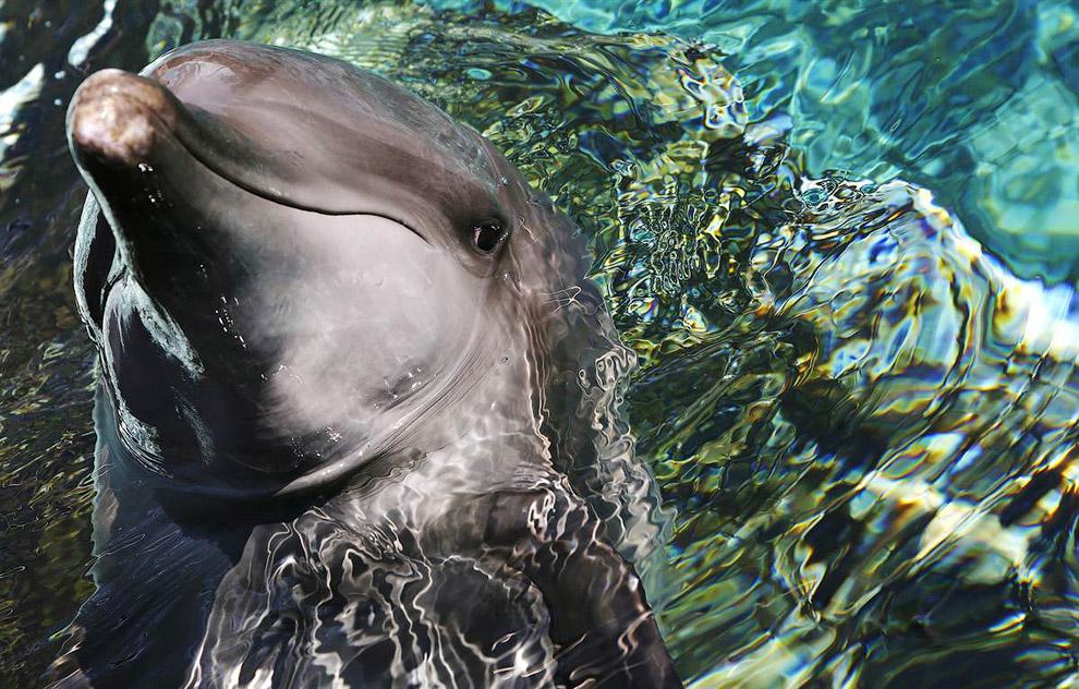 Дельфин из Морского парка в Сингапуре