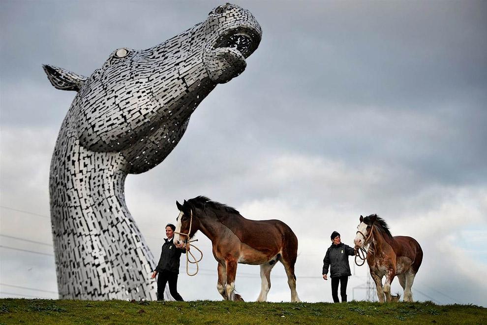 Лошади-тяжеловозы породы Клейдесдаль (шотландская хладнокровная лошадь)