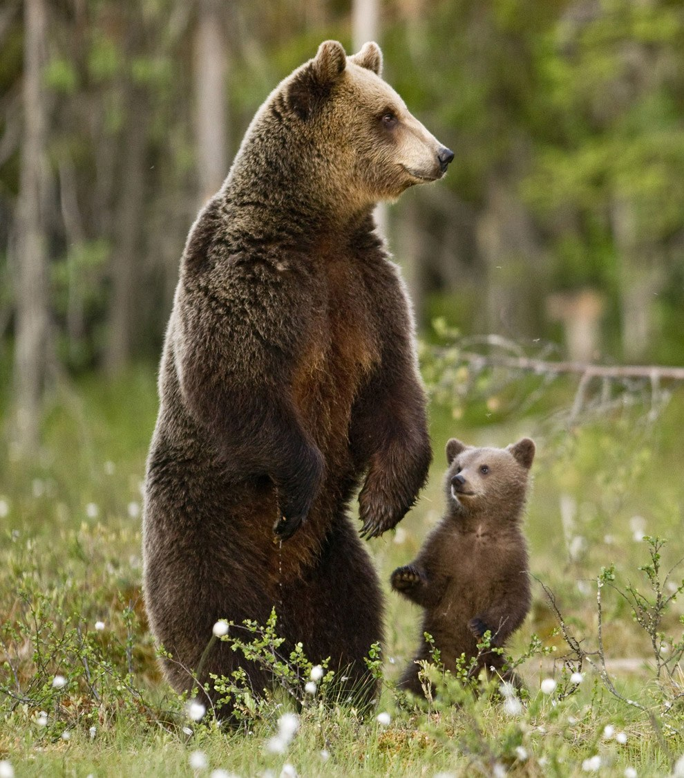 Фото медведь