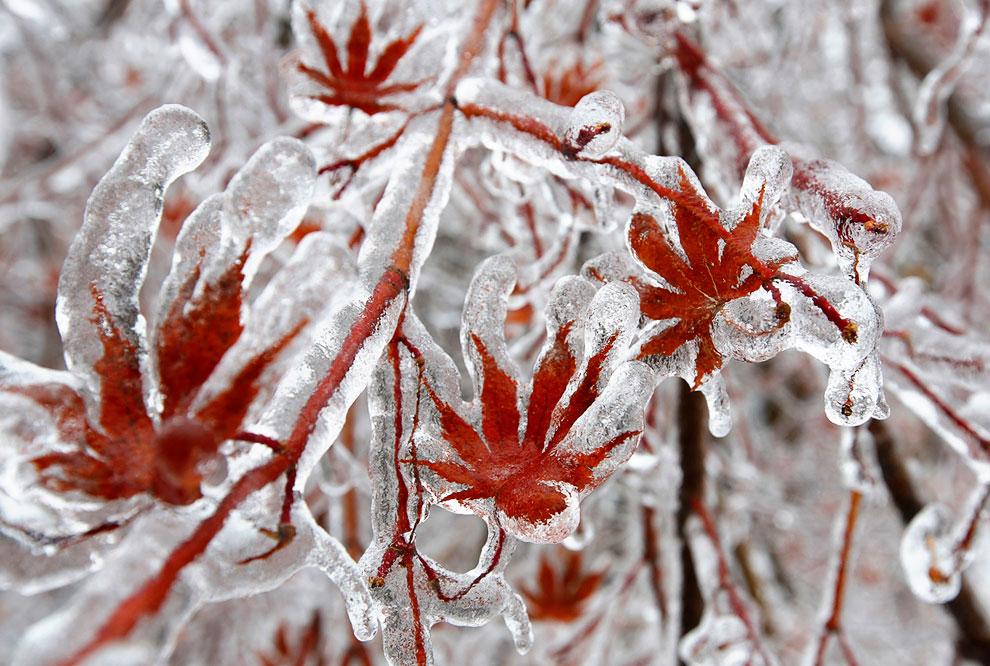 Ледяной дождь в Канаде