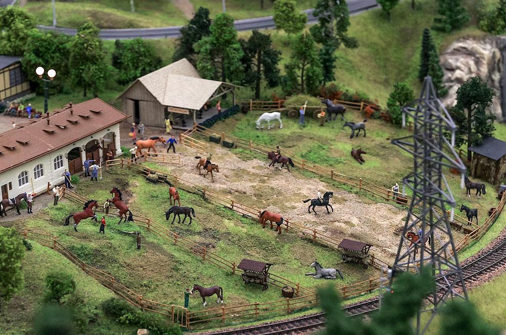 Здесь растят лошадей