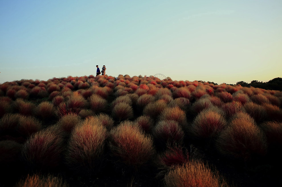 Красная горка, Японии
