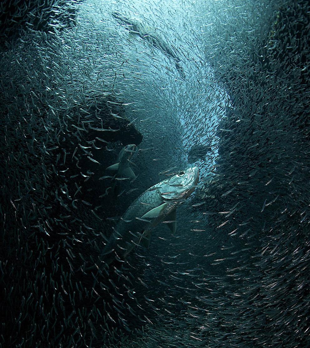 Тропический подводный рай