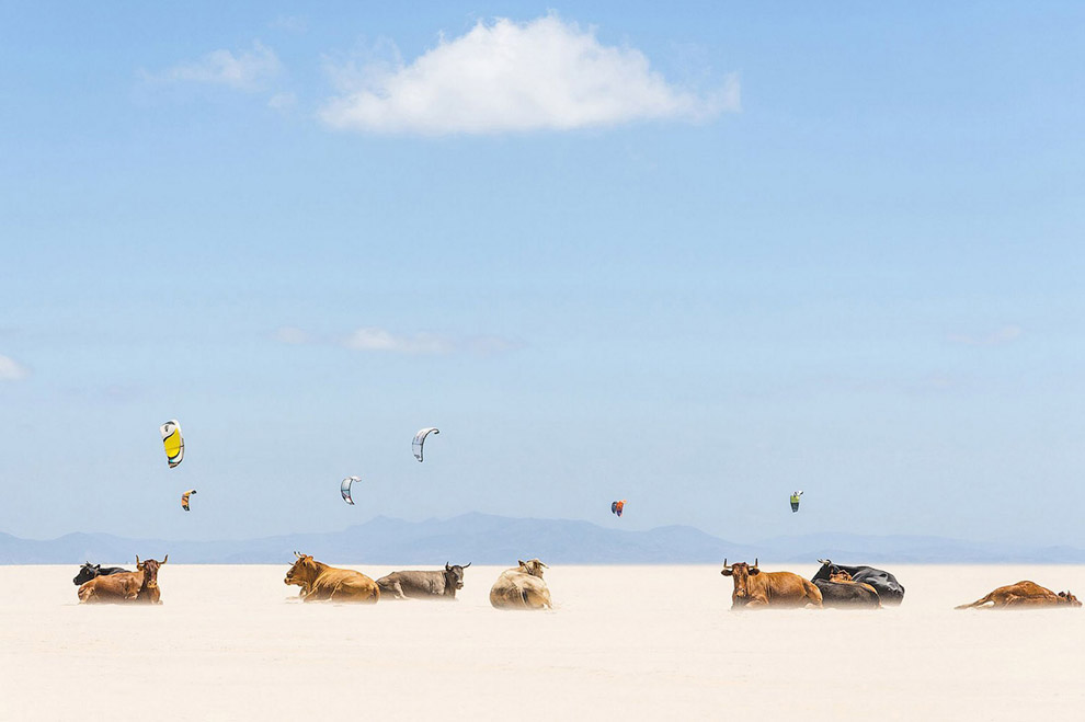 Коровы и воздушные змеи на пляже