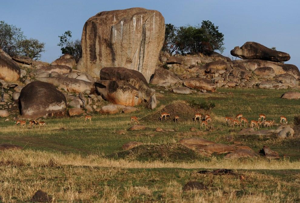 Стадо джейранов пасется вблизи скальных образований