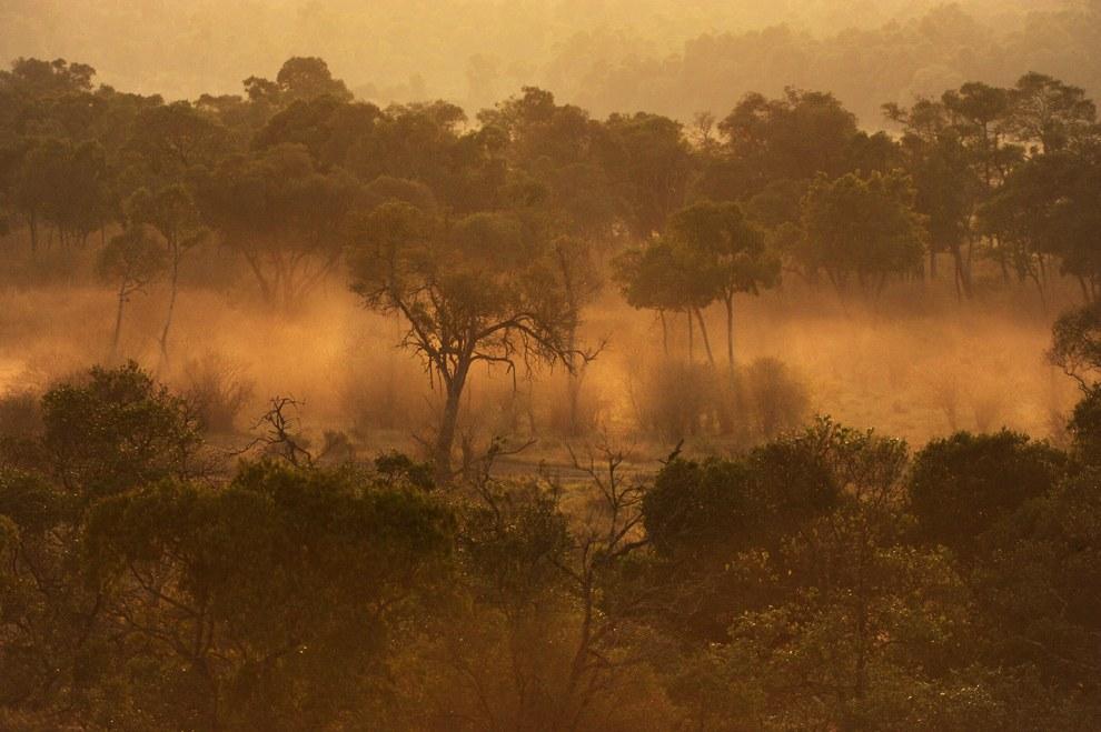 Утренние лучи пронизывают большое облако пыли. Это идут слоны