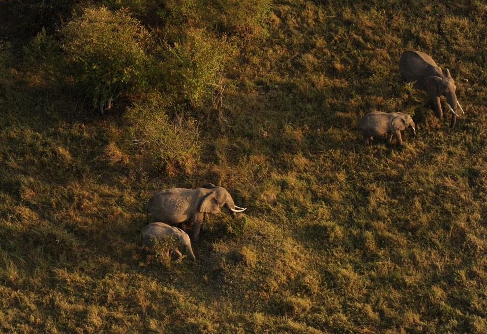 Пара слонов со слонятами