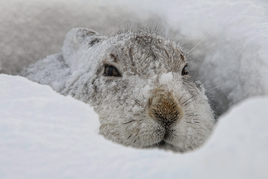 заяц хвост фото