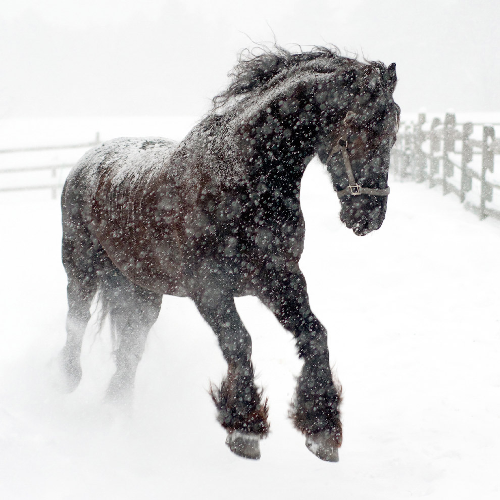 Снежная лошадь