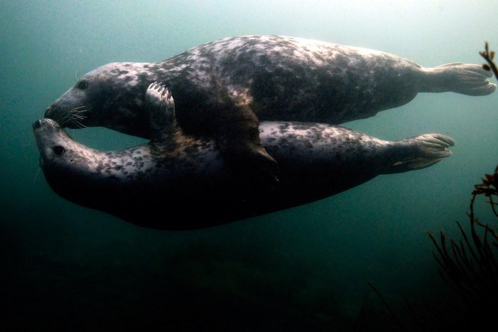 На островах живут не только птицы, но и другие животные. Тюлени, например