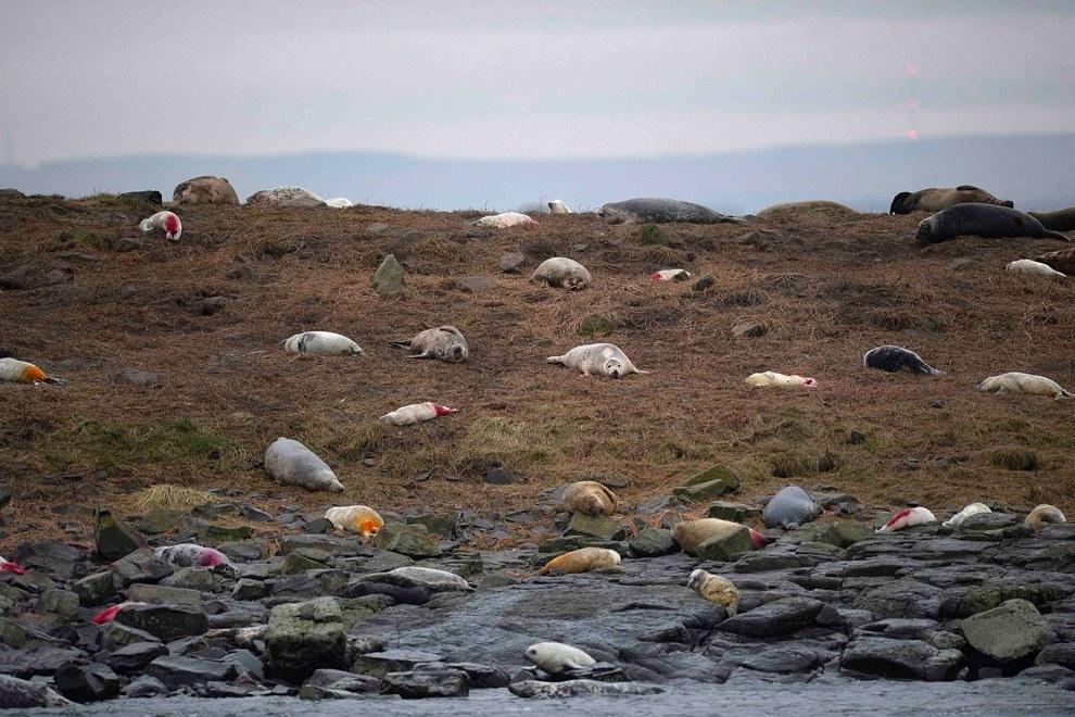 Получаются вот такие разноцветные тюлени