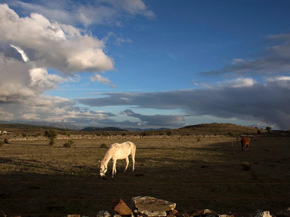 Лошади — главные герои торжеств на День святого Антонио