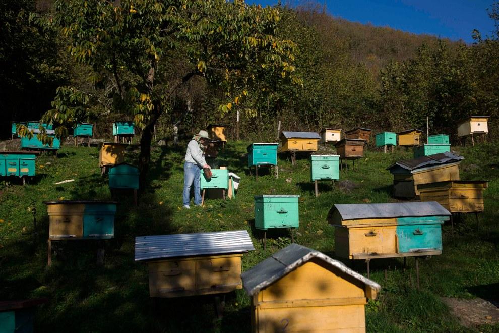 Пасека в селе Тхагапш в Лазаревском районе города Сочи. Хозяин говорит, что мед у черкесов был основным национальным продуктом