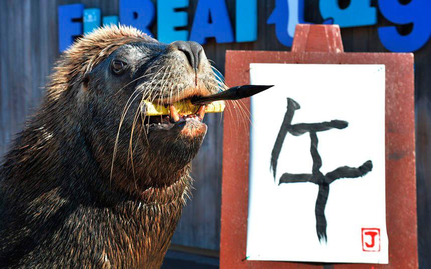 Морской лев нашел у себя талант художника