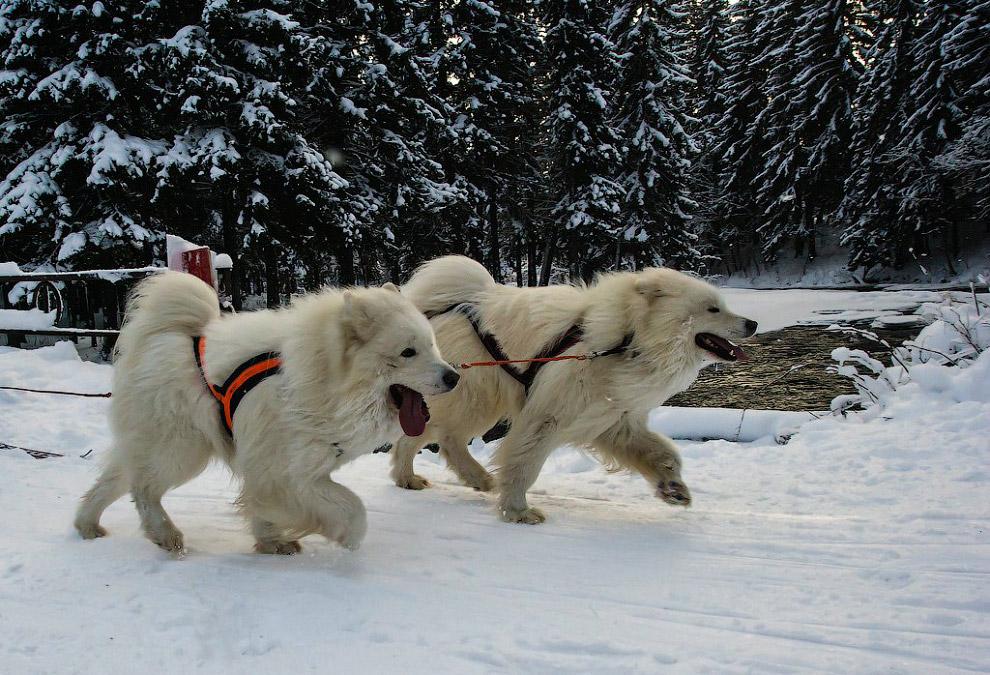 Гонка на собачьих упряжках «По земле Сампо»