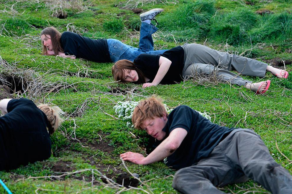 Рейнджеры изучают гнезда тупиков в рамках переписи птичьего населения островов Фарн