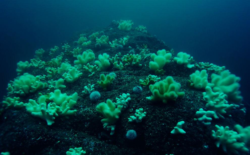 Мягкие кораллы и Морские ежи и берегов островов Фарн
