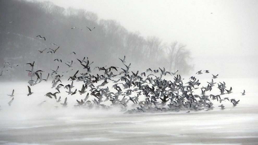 Замерзшие чайки