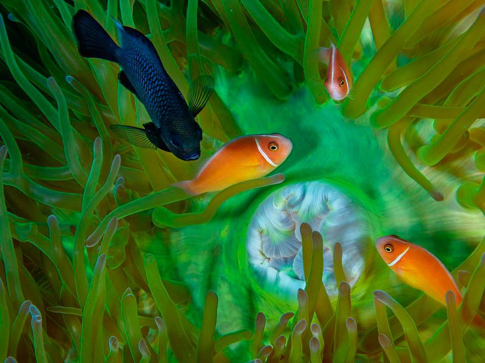 Подводный мир в Папуа-Новая Гвинея