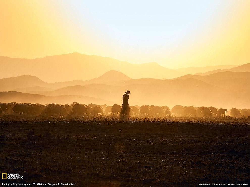 Пастух со своим стадом, Ирак