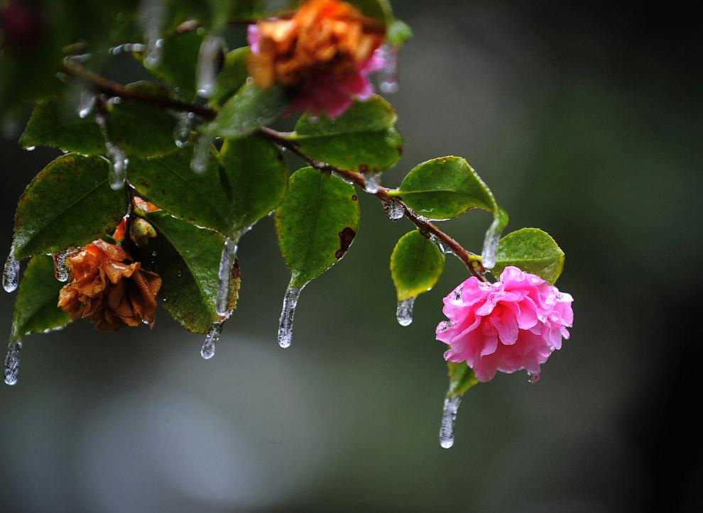 Если постараться, то можно найти положительные моменты в ледяном дожде. Например, такую красоту в штате Джорджия на юго-востоке США
