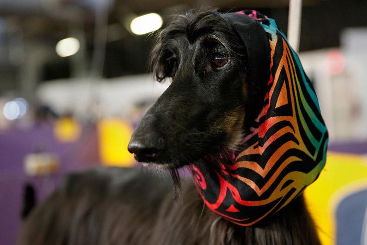 Выставка собак Westminster Kennel Club 2014