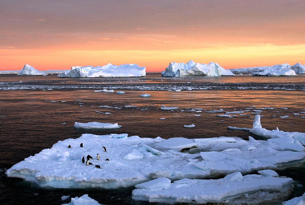 Пингвины Адели в Восточной Антарктиде